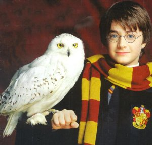 Harry Potter et Hedwidge