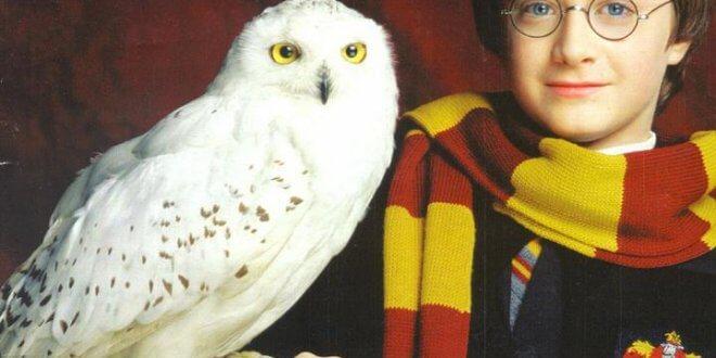 Des films-concerts Harry Potter au Royaume-Uni