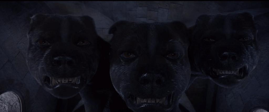 Touffu, le chien à 3 têtes